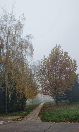 Photo for Moody sky and autumn tree on the city - Royalty Free Image
