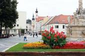 Trojicne square near the city tower