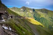 Transfagarasan horské silnici s divokými květy z Rumunska