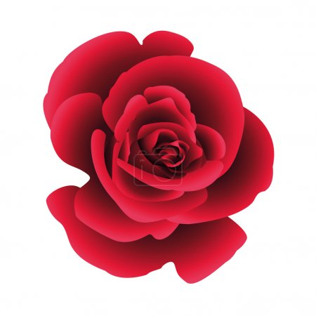 Illustration for Single flower rose. Vector. - Royalty Free Image