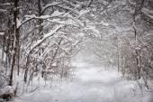 Zimní cesta v lese