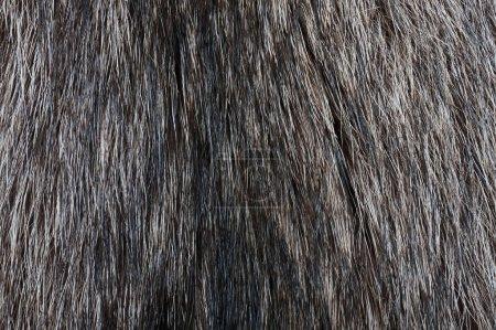 Racoon fur texture
