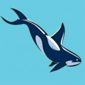 Grampus leaping Killer Whale Orca Orcinus Vector illustration  on blue backround