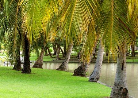 palm in sunsat