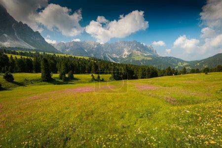 Photo pour Beau paysage des Alpes Dolomites avec champ fleuri au premier plan . - image libre de droit