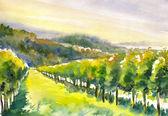 Vineyard watercolor painted