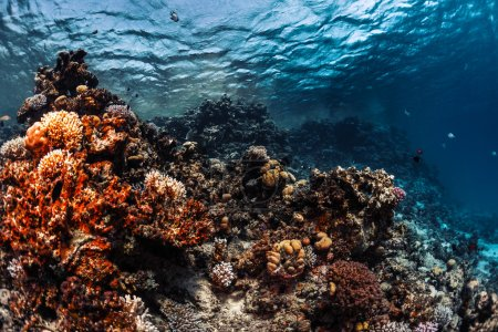 Photo for Coral reef with fish underwater - Royalty Free Image