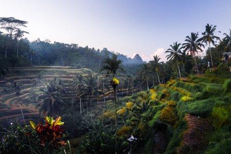 Photo pour Rizières au lever du soleil près de la ville d'Ubud - image libre de droit