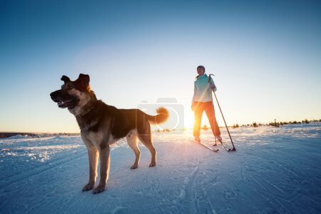 Skiing with the dog