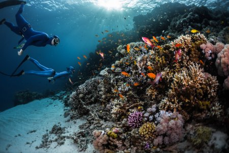 Two freedivers swimming underwater
