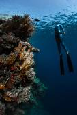 Lady free diver