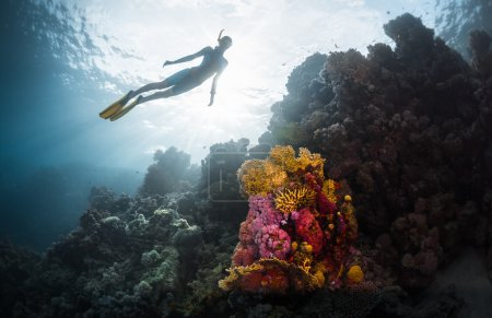 Free diver exploring vivid coral reef