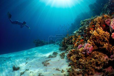 Photo pour Lady plongeur libre nageant sous l'eau vers les récifs coralliens vifs - image libre de droit