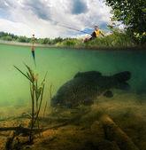 Pond with carp