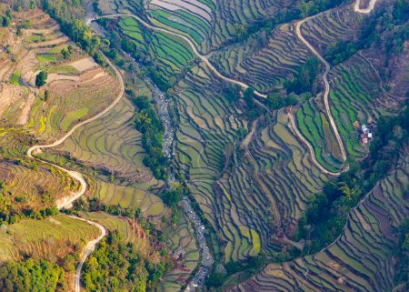 Aerial view of paddy fields near Pokhara