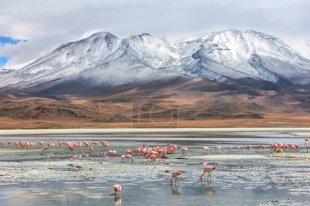 Photo pour Paysage bolivien avec montagne blanche en arrière-plan - image libre de droit