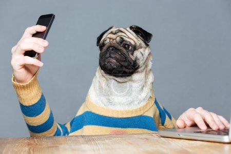 Amusing pug dog with man hands using smartphone