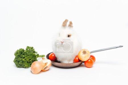 Rabbit sitting in frying pan