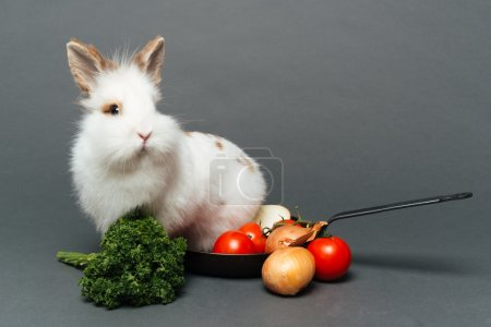 Rabbit inside a frying pan