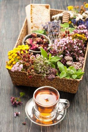 Photo pour Herbes, fleurs et tisanes séchées et fraîches. Médecine végétale - image libre de droit