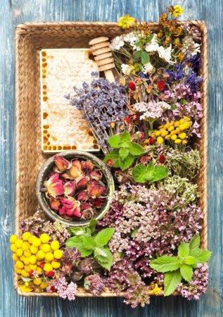 Photo pour Herbes et fleurs séchées et fraîches dans le panier. Médecine végétale - image libre de droit