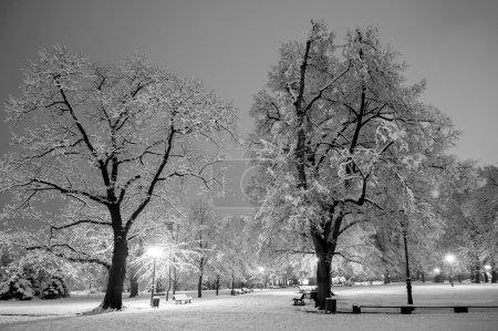 Photo pour Parc de ville d'hiver dans la soirée. Noir et blanc. - image libre de droit