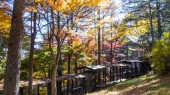 The fall season of Karuizawa, Nagano with nice color, Japan