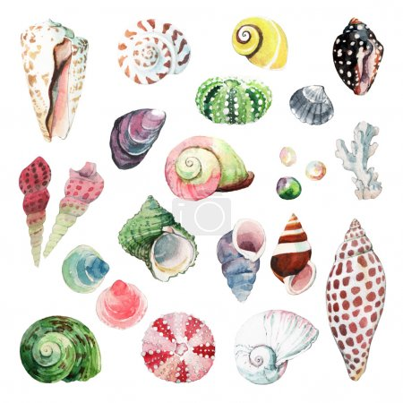 Photo for Watercolour illustrations of various seashells isolated on white background - Royalty Free Image