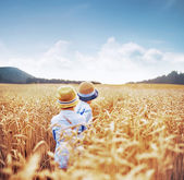 Two brothers among corn fields