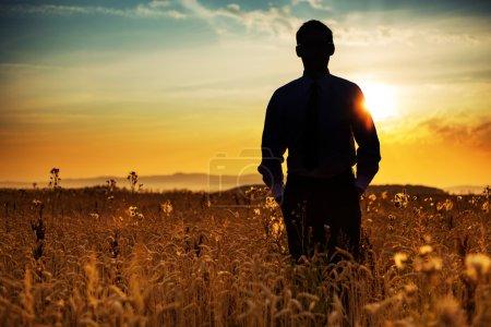 Photo pour Silhouette d'homme d'affaires parmi le maïs doré - image libre de droit