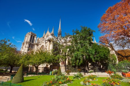 View of Notre Dame cathedral though foliage