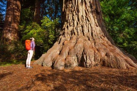 Photo pour Femme avec sac à dos debout près du grand arbre de Redwood en Californie pendant vue journée ensoleillée l'été par le bas - image libre de droit
