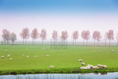 sheep on pasture in the green field