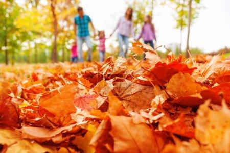 Photo pour Feuilles d'automne orange rapprochées et floues promenades en famille sur le fond marchant en tenant la main - image libre de droit