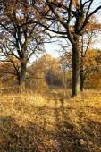 autumn season. Forest