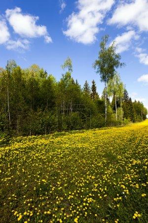 in spring season