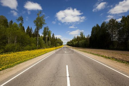 Photo pour Une petite route asphaltée traversant la forêt. printemps - image libre de droit