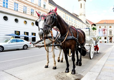 Wedding horse-drawn carriage in Vienna, Austria