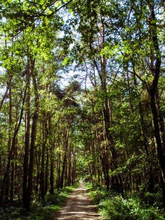 Photo pour Route à travers la forêt verte - image libre de droit