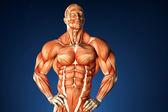 Bodybuilder anatomy. Contains clipping path