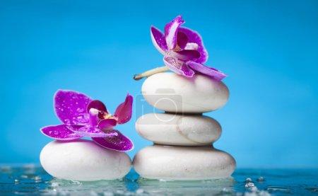 Photo pour Fleurs d'orchidée pourpres sur les pierres blanches de zen - image libre de droit