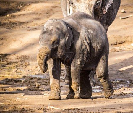 Herd of elephants on sandy ground.