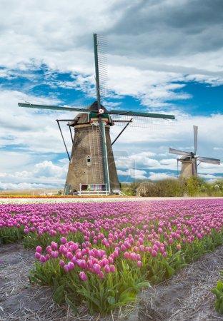 Photo pour Moulin à vent avec beau champ de tulipes en Hollande . - image libre de droit