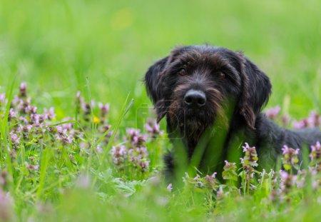 Beautiful black dog posing on spring meadow