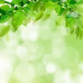 Přírodní pozadí se zelenými listy