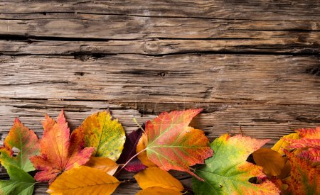 Autumn maple leaves on gray wooden background