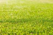Zelené trávě textura