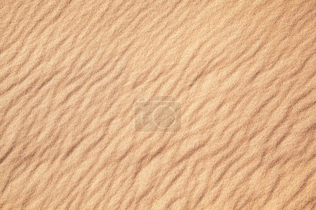 Falistego piasek pustyni.