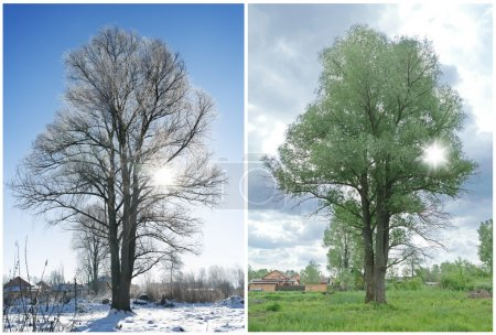 Photo pour Deux saisons et le même arbre à la campagne . - image libre de droit