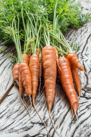 Fresh organic carrots on the wooden table.